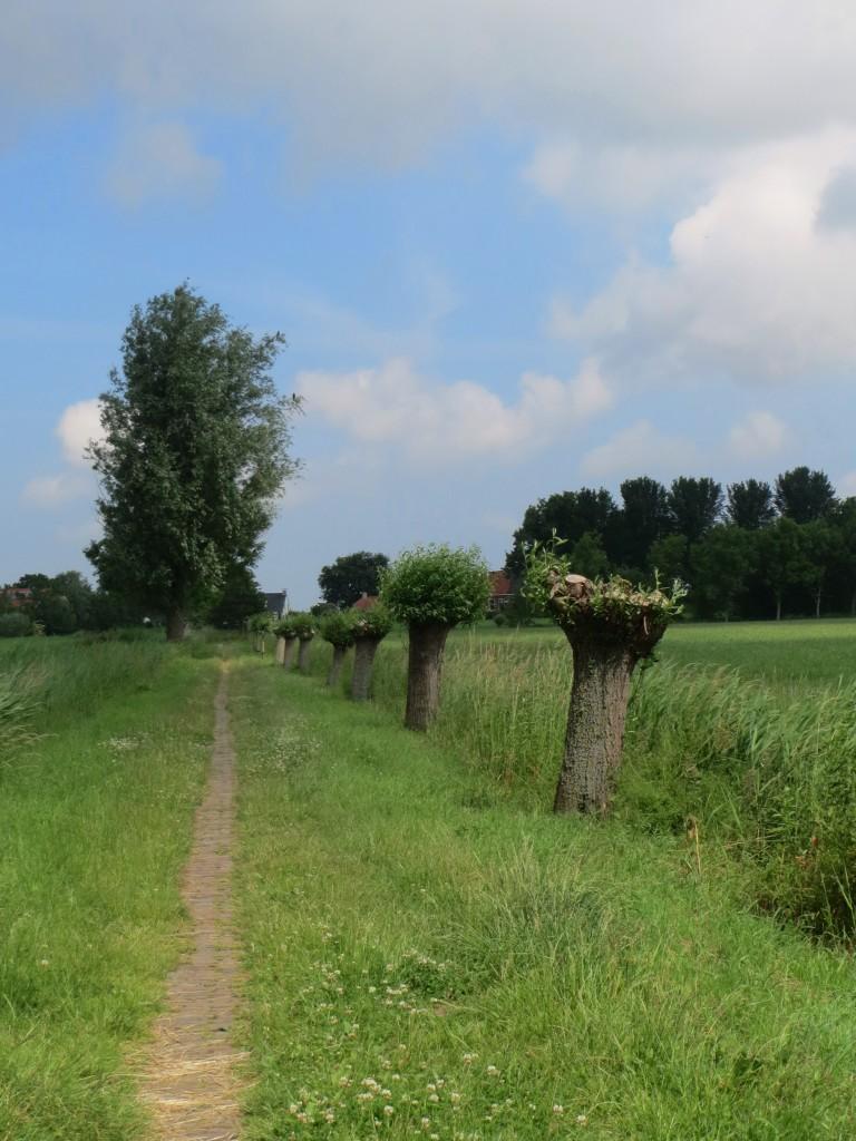 Valgeweg