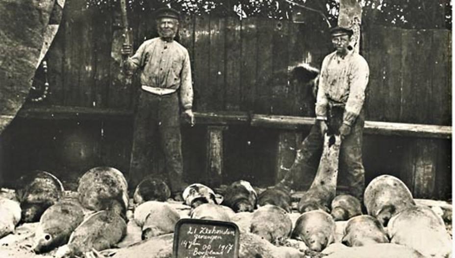 Westernieland,14 juni 1917. Tjark Jacobs Visser en zoon Jacob Tjark hebben maar liefst 21 zeehondjes doodgeknuppeld (om te huilen). (Foto: Hans Zant)