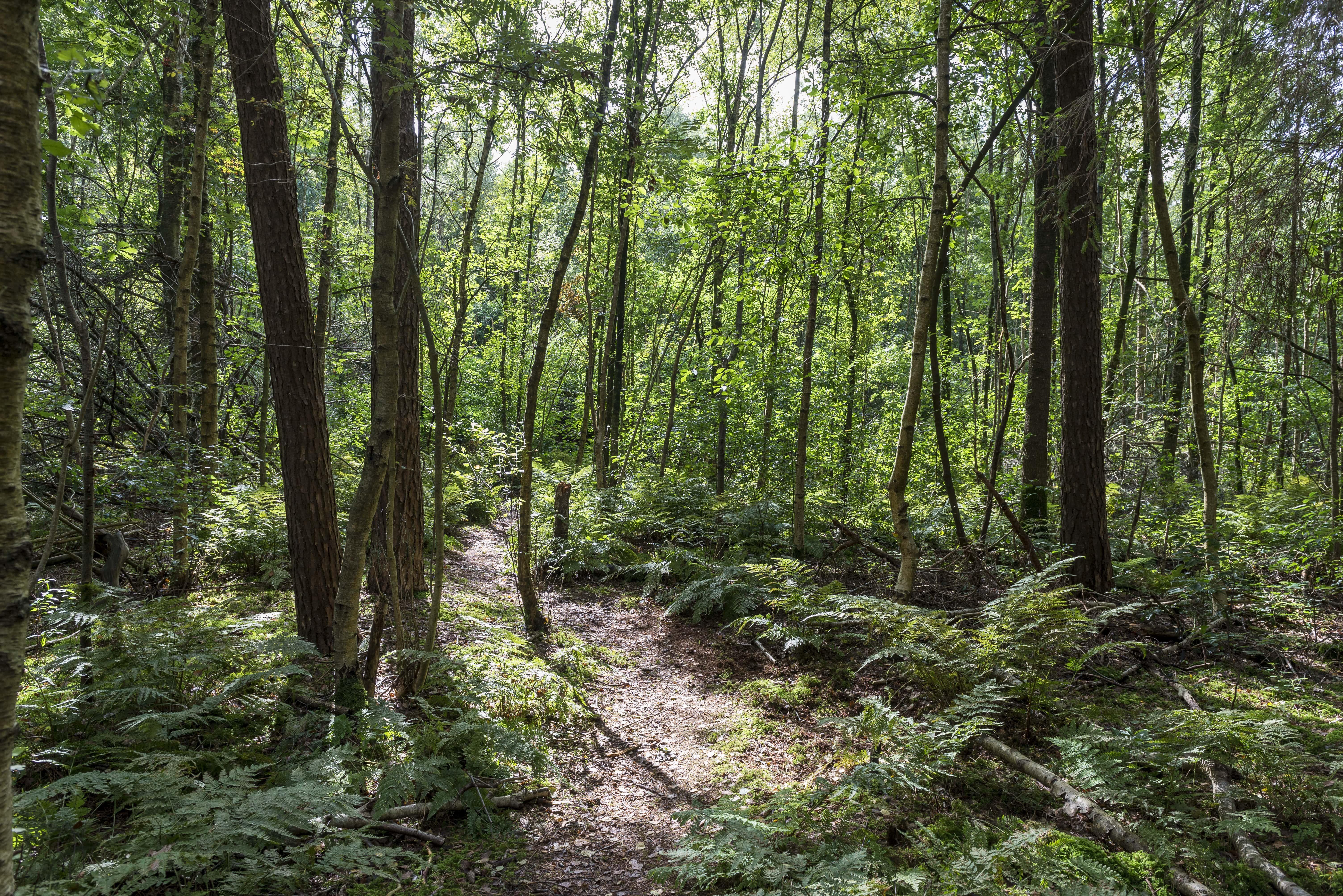 Nanninga's Bos. © Foto door Geert Job Sevink / Het Groninger Landschap