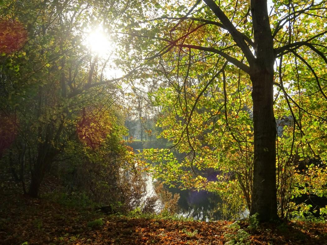 Landschapspark Rensumborg in Uithuizermeeden. © Sanne Meijer
